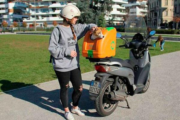 trasladar a tu mascota en moto